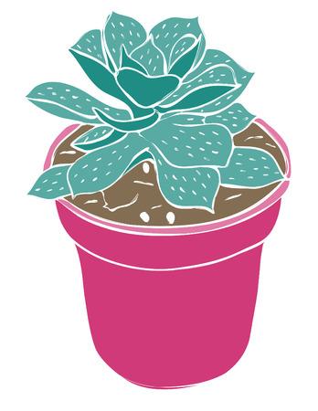 cactus flower: A potted succulent plant  Illustration