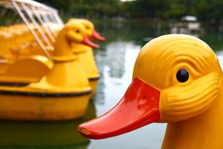 The Duck at Lumpini Park, Thailand