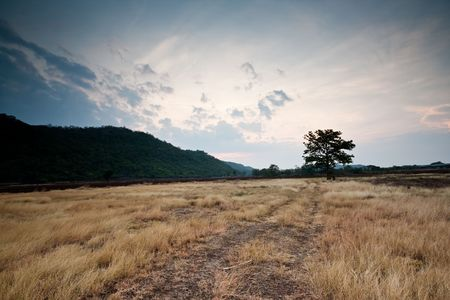 Landscape Lonely Tree in The Field Mountain in Thailand