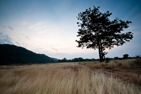 Lonely Tree in The Field Mountain in Thailand