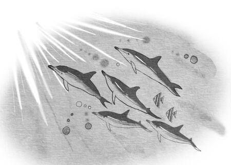 illustration of dolphin swim together Stock Photo