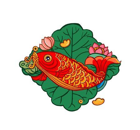 Koi fish on white