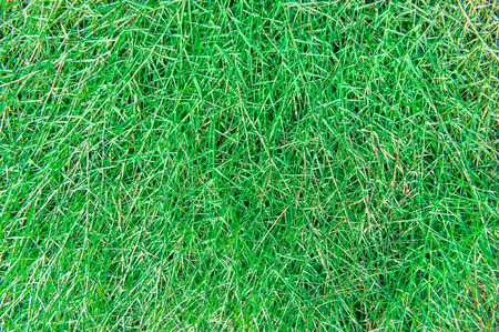 sward: Sward Green Texture Background Stock Photo