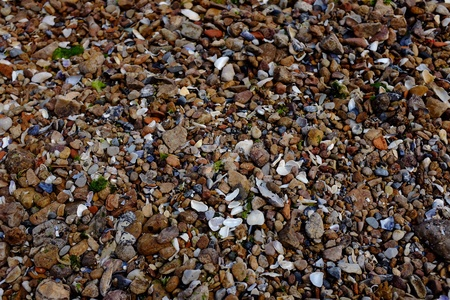 closeup: Sea stones and shells as a background