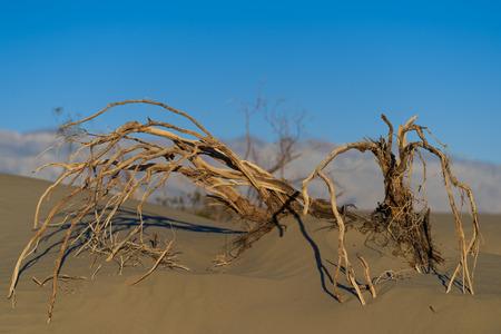 Dead tree branches  in desert Banco de Imagens