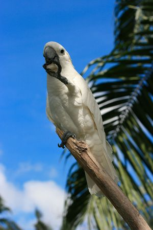 White parrot on the branch Stock Photo