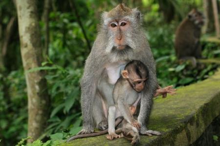 彼女の子供とサルの母。