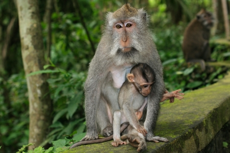 Monkey mother with her child.