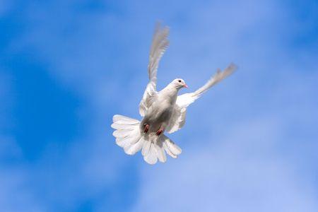 空の上の白いハト。