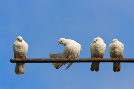 Four doves on the perch. photo