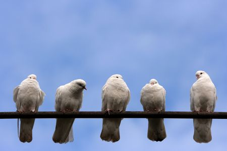 Five pigeons on the perch.