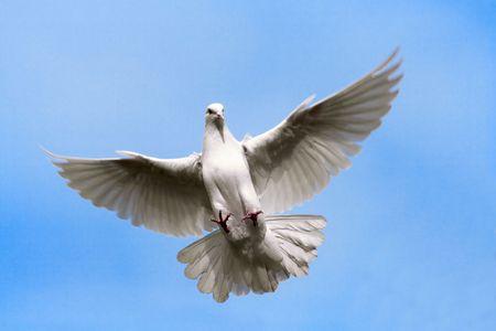 白い鳩が空の上に飛んでいます。