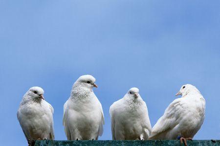 Four doves. photo