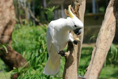 白の枝にオウム