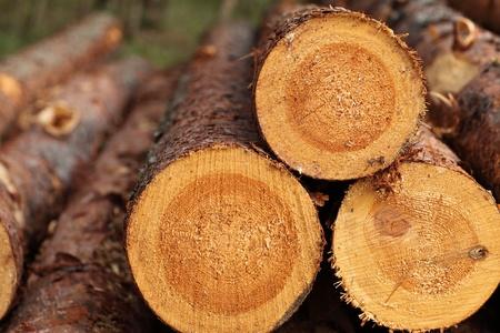 Log background; macro Stock Photo