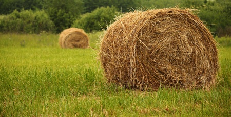 boundless: Field with haystacks