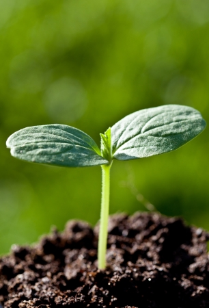 Green seedling in a soil against green background photo