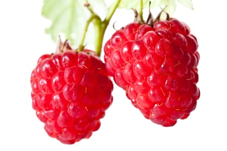 Ripe raspberries isolated over white background Stock Photo - 14812534