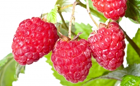 Ripe raspberries isolated over white background photo