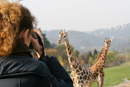 avocation: Woman shooting group of giraffes