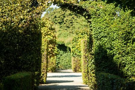 Summer park in Shonbrunn, Vienna photo
