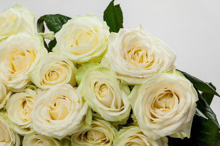 roseleaf: Bouquet of beautiful tea-roses on neutral background