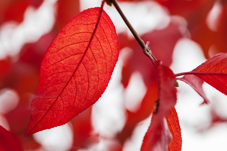 fall landscape: Autumn landscape: beautiful leaf fall background Stock Photo