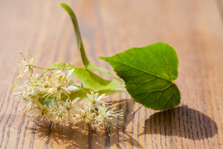 officinal: Lime blossom on wooden background