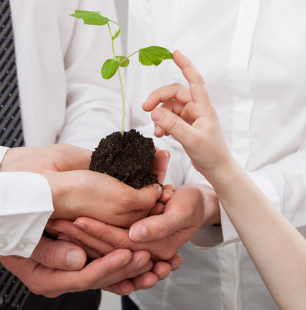 plantlet: Group of business people holding a green sprout and childs finger touching it - closeup shot Stock Photo