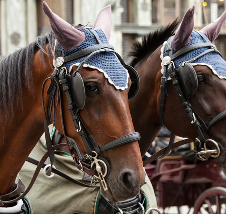hackney carriage: Horse-driven carriage in Vienna, Austria
