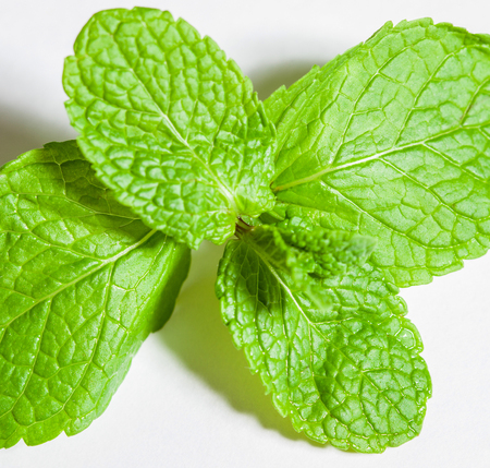 phytotherapy: Fresh brandy mint on white background Stock Photo