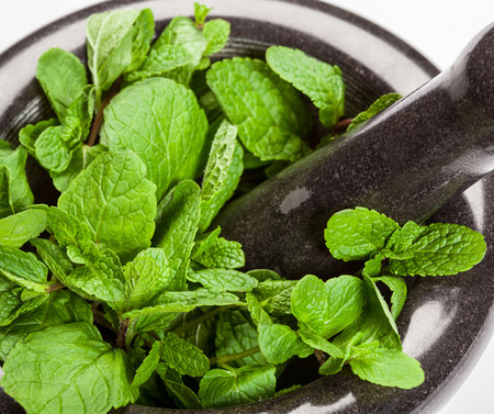 phytotherapy: Brandy mint in a mortar on white background - macro shot