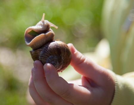 gently: Llittle girl holding garden snail gently - close-up shot Stock Photo