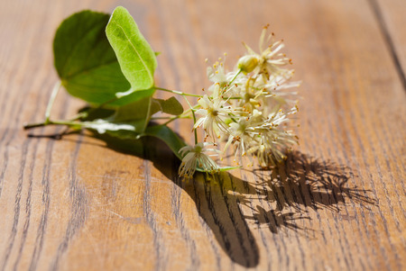 lime blossom: Lime blossom on wooden background