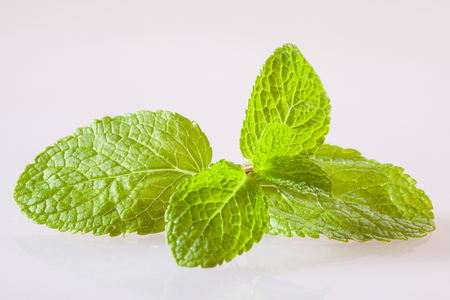 neutral: Fresh peppermint leaves on neutral background