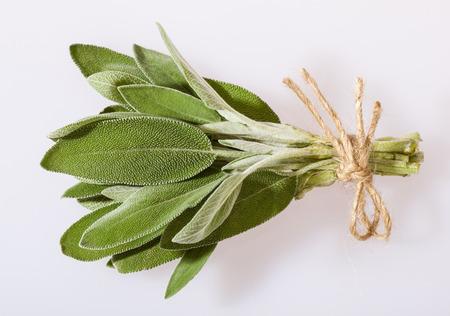 velvety: Bunch of fresh sage leaves on neutral background
