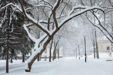 snowbound: Winter park , many snowbound trees
