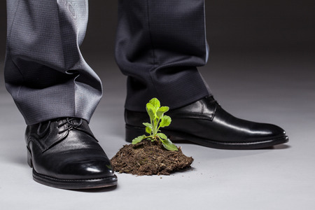 imminence: Businessman standing near the young sprout, gray background Foto de archivo