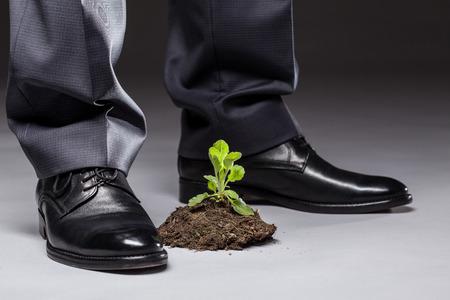 imminence: El hombre de negocios de pie cerca de los brotes jóvenes, fondo gris Foto de archivo