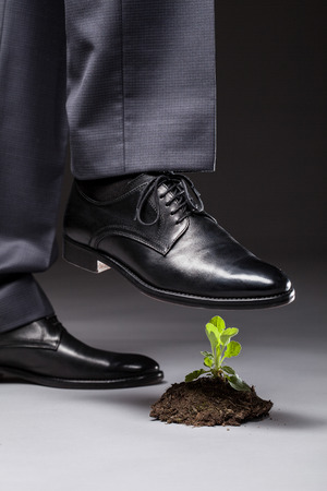 imminence: Pie masculino en el zapato negro pisotea un brote joven, fondo gris Foto de archivo