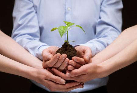 crecimiento planta: El grupo de manos que sostienen la planta verde junto con el cuidado - tiro del primer Foto de archivo