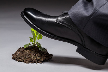 imminence: Male foot in black shoe trampling a young sprout, gray background