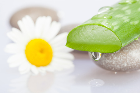 Beautiful composition of sliced aloe, chamomile flower and sea stones - spa and bodycare concept