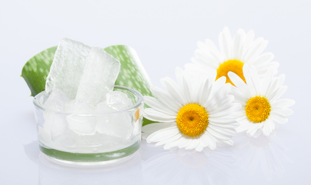 Beautiful composition of fresh aloe vera leaves, aloe pulp in a gluss bowl and chamomile flowers - concept of natural skincare