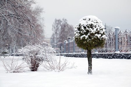 City park covered with fresh snow, beautiful winter landscape