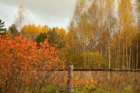 Beauty of autumn colors: bright early autumn rural lanscape