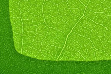 葉テクスチャ マクロ緑背景 写真素材