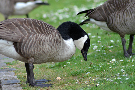 Goose in the park
