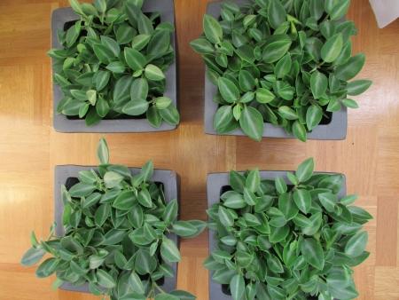 houseplants: Houseplants
