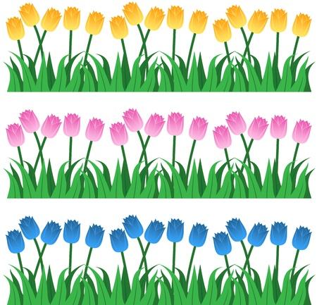 Tulip Rows Illustration